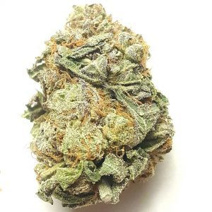 Buy Dutch Treat Marijuana Online