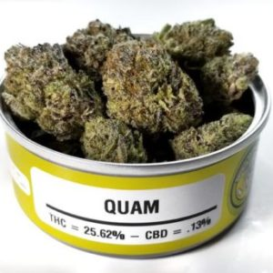 Buy Space Monkey Meds Quam