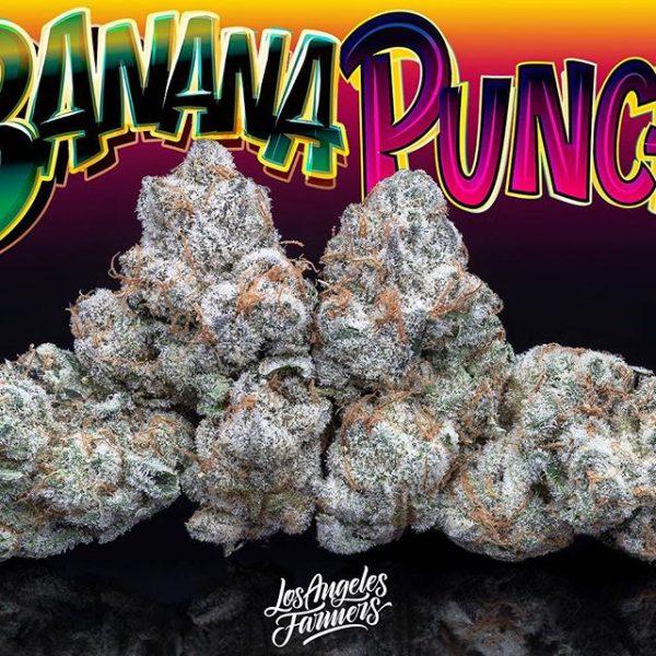 Buy Jungle Boys Banana Punch