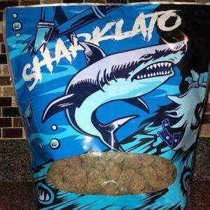 Buy Sharklato Runtz Weed