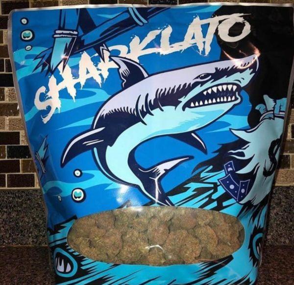 Buy Sharklato Runtz Weed